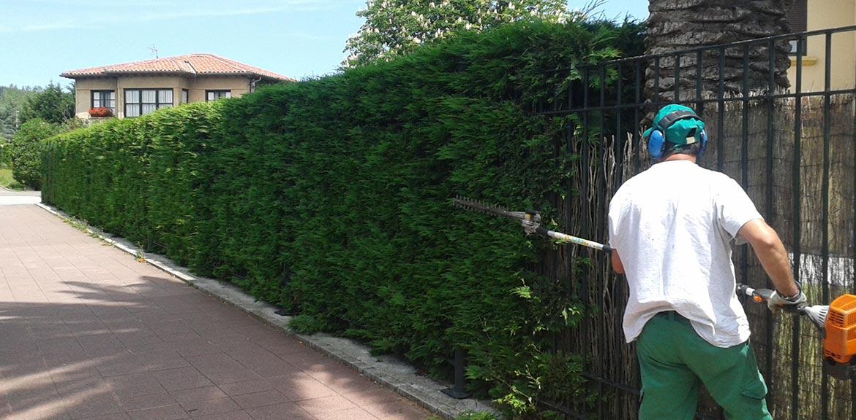 Mantenimiento de espacios verdes o jardinería