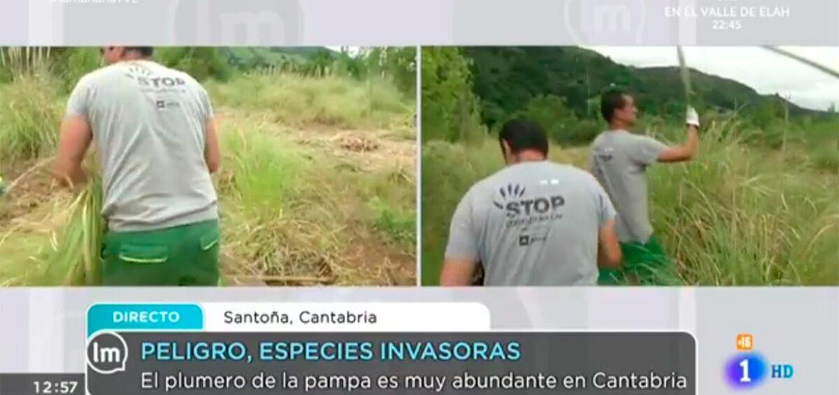 El proyecto Life Stop Cortaderia en TVE1