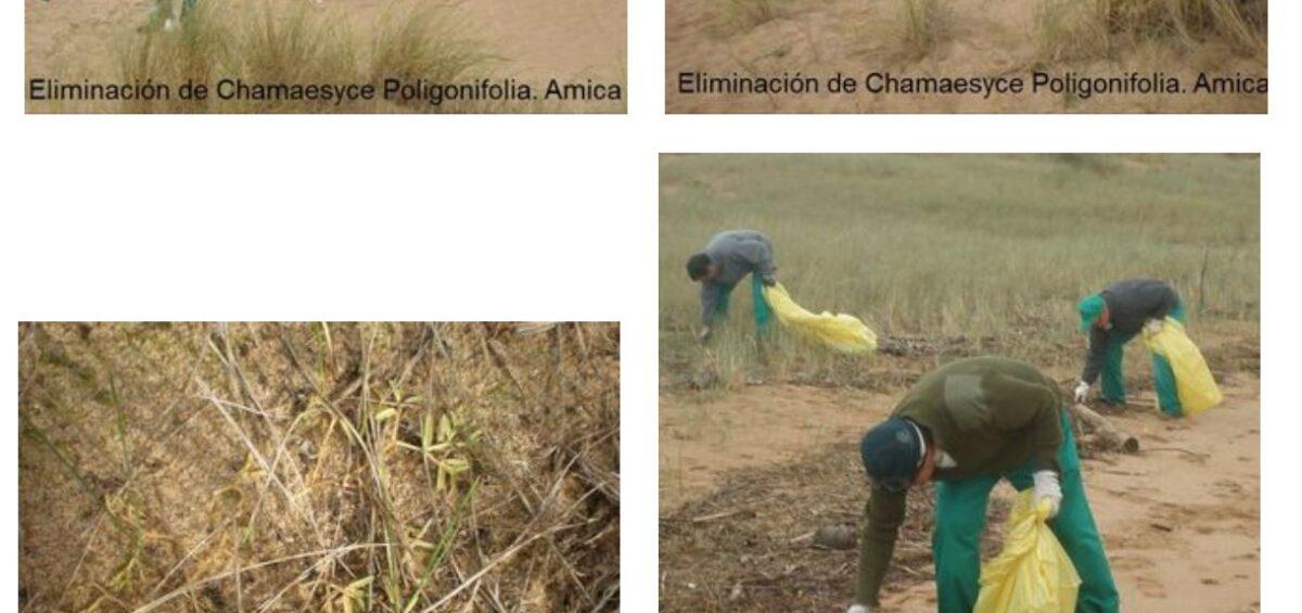 Campaña Eliminación Plantas Invasoras 2012